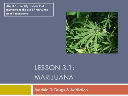 LESSON 3.1: MARIJUANA Module 3: Drugs & Addiction Obj. 3.7: Identify factors that contribute to the use of marijuana among teenagers.