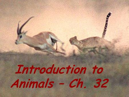 Introduction to animals