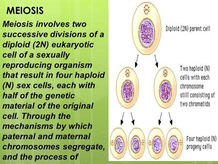 MEIOSIS Meiosis involves two successive divisions of a diploid (2N) eukaryotic cell of a sexually reproducing organism that result in four haploid (N)