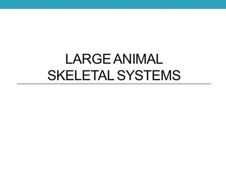 LARGE ANIMAL SKELETAL SYSTEMS. Functions of the Skeletal System Form Protection Support Strength.