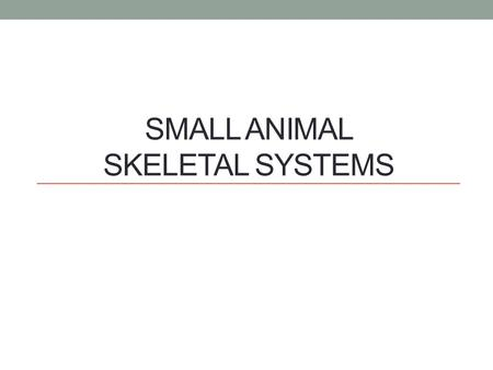 SMALL ANIMAL SKELETAL SYSTEMS. Functions of the Skeletal System Form Protection Support Strength.