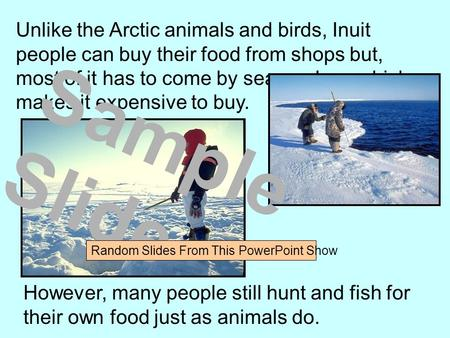 Unlike the Arctic animals and birds, Inuit people can buy their food from shops but, most of it has to come by sea or plane which makes it expensive to.