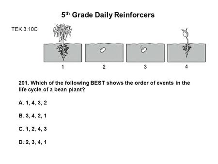 5 th Grade Daily Reinforcers TEK 3.10C 201. Which of the following BEST shows the order of events in the life cycle of a bean plant? A. 1, 4, 3, 2 B. 3,
