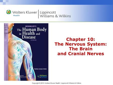 Chapter 10: The Nervous System: The Brain and Cranial Nerves