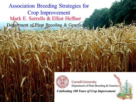 Mark E. Sorrells & Elliot Heffner Department of Plant Breeding & Genetics Association Breeding Strategies for Crop Improvement.