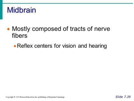 Midbrain Slide 7.39 Copyright © 2003 Pearson Education, Inc. publishing as Benjamin Cummings  Mostly composed of tracts of nerve fibers  Reflex centers.