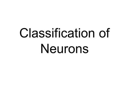 Classification of Neurons. Nature of the Nervous System n Camillo Golgi n The Synctium l continuous network l no gaps ~