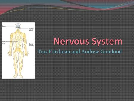 Troy Friedman and Andrew Gronlund. Functions of the Nervous System Sensory Neurons=receptors Detect changes inside and outside the body Convert the information.