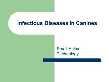 Infectious Diseases in Canines Small Animal Technology.