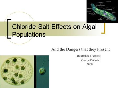 Chloride Salt Effects on Algal Populations And the Dangers that they Present By:Brandon Perrotte Central Catholic 2008.