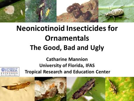 Neonicotinoid Insecticides for Ornamentals The Good, Bad and Ugly Catharine Mannion University of Florida, IFAS Tropical Research and Education Center.