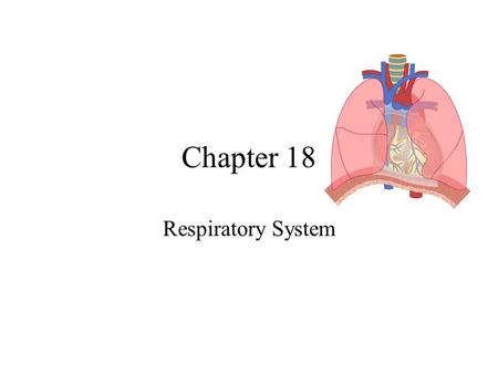 Chapter 18 Respiratory System.