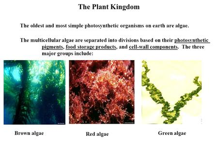 The Plant Kingdom The oldest and most simple photosynthetic organisms on earth are algae. The multicellular algae are separated into divisions based on.