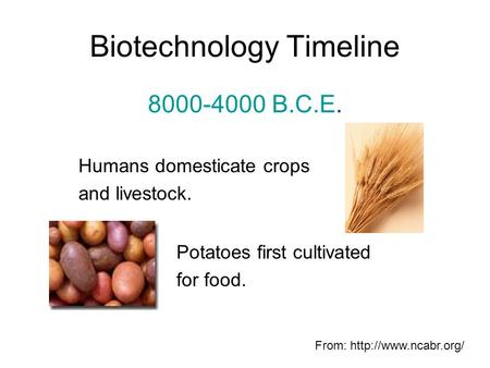 Biotechnology Timeline 8000-4000 B.C.E. Humans domesticate crops and livestock. Potatoes first cultivated for food. From: