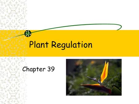 Plant Regulation Chapter 39. Plant growth Plants respond to environment Growth response to abiotic factors Water, wind and light.