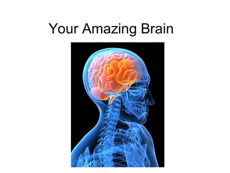 Your Amazing Brain.