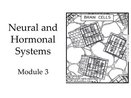 Neural and Hormonal Systems Module 3. History of Mind In 1800, Franz Gall suggested that bumps of the skull represented mental abilities. Phrenology Bettman/