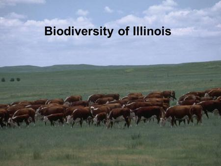 Biodiversity of Illinois. Biodiversity The number and variety of organisms found within a specified geographic region. Three levels: –Genes –Species –Ecosystems.