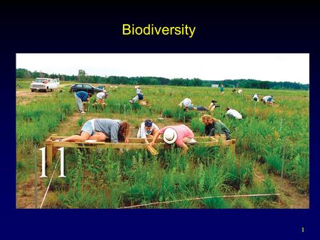1 Biodiversity. 2 Outline Biodiversity and the Species Concept  Varied Definitions Benefits of Biodiversity Threats to Biodiversity  Natural and Human.