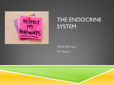 THE ENDOCRINE SYSTEM SOAR Biology – Mr. Najera. WHAT IS THE ENDOCRINE SYSTEM? Remember: A group of Organs & Glands make up a system. It Has two main functions: