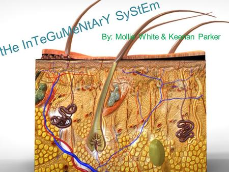 tHe InTeGuMeNtArY SyStEm By: Mollie White & Keenan Parker.