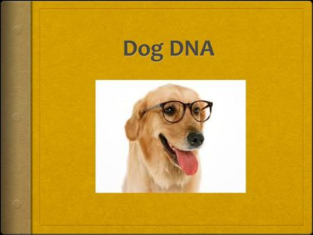 DOG DNA  You will be assigned a partner.  You will need:  1 envelope with 32 gene strips  Tape  Construction paper  Markers  Trait Map (Moodle)