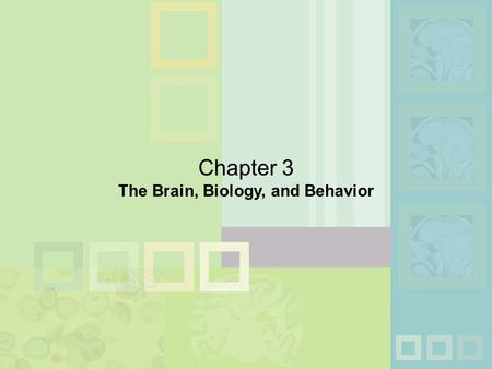 Chapter 3 The Brain, Biology, and Behavior. n Neuron: Individual nerve cell  Dendrites: Receive messages from other neurons  Soma: Cell body; body of.