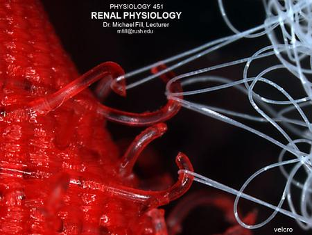 Cross PHYSIOLOGY 451 RENAL PHYSIOLOGY Dr. Michael Fill, Lecturer velcro.