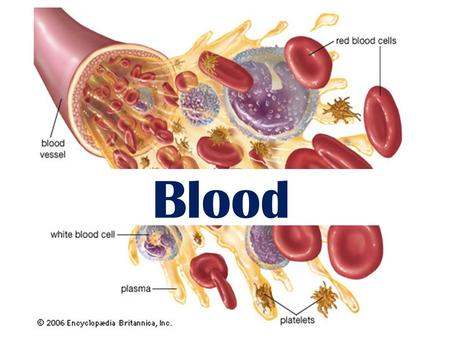 Blood. Objectives List the three primary functions of blood List avg vol. of blood, viscosity, pH, % body weight Distinguish between plasma and formed.