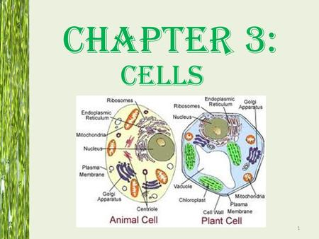Chapter 3: Cells.