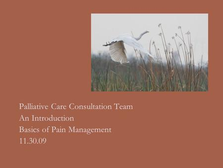 Palliative Care Consultation Team An Introduction Basics of Pain Management 11.30.09.