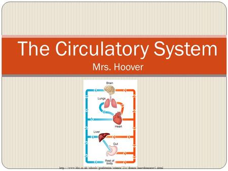 The Circulatory System Mrs. Hoover