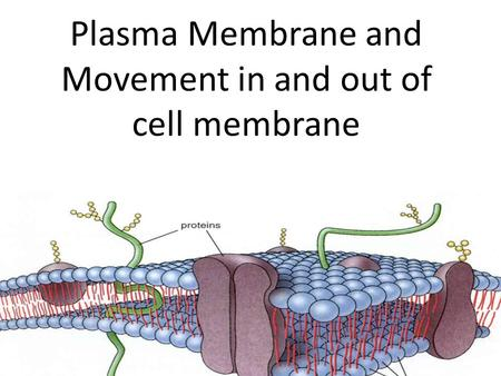 Plasma Membrane and Movement in and out of cell membrane.