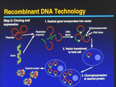 Why Recombine DNA? 1.To produce protein products 2.To alter genetic inheritence (new traits) 3.For diagnostic tests – allows researchers to study causes.
