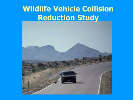 Wildlife Vehicle Collision Reduction Study
