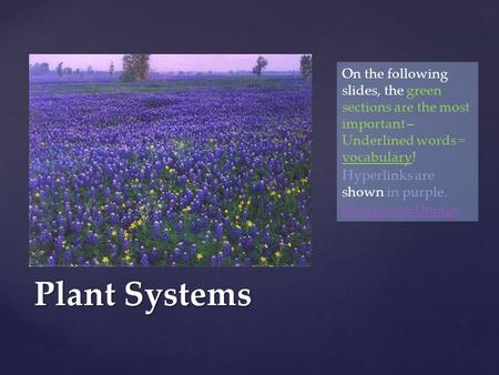 Plant Systems On the following slides, the green sections are the most important – Underlined words = vocabulary! Hyperlinks are shown in purple. Background.