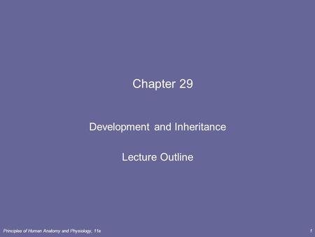 Principles of Human <strong>Anatomy</strong> <strong>and</strong> <strong>Physiology</strong>, 11e1 <strong>Chapter</strong> 29 Development <strong>and</strong> Inheritance Lecture Outline.