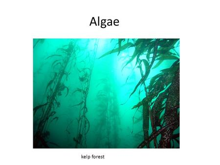 Algae kelp forest.