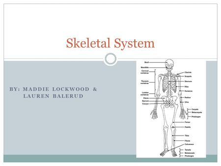 BY: MADDIE LOCKWOOD & LAUREN BALERUD Skeletal System.