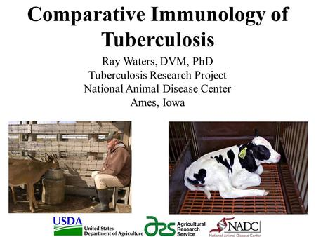 Comparative Immunology of Tuberculosis Ray Waters, DVM, PhD Tuberculosis Research Project National Animal Disease Center Ames, Iowa.