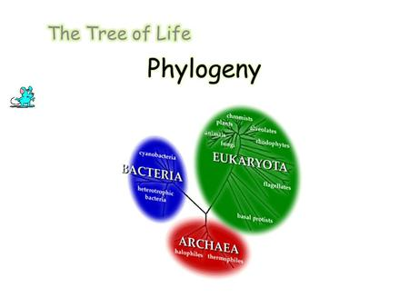 Phylogenetics Phylogenetic trees illustrate the evolutionary relationships among groups of organisms, or among a family of related nucleic acid or protein.