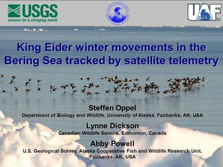 King Eider winter movements in the Bering Sea tracked by satellite telemetry Steffen Oppel Department of Biology and Wildlife, University of Alaska, Fairbanks,