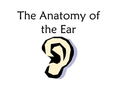 The Anatomy of the Ear The Outer Ear 1. Auricle (Pinna) 2. External Auditory Canal (ear canal) Channels sound into the ear.