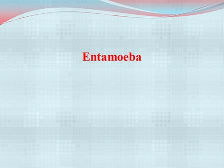 Entamoeba. Hazard Identification What is Entamoeba? single-celled protozoan subphylum Sarcodina Entamoeba is a single-celled protozoan parasite belonging.