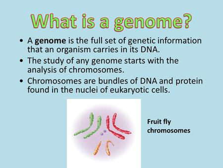 A genome is the full set of genetic information that an organism carries in its DNA. The study of any genome starts with the analysis of chromosomes. Chromosomes.