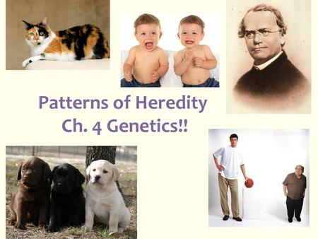 Patterns of Heredity Ch. 4 Genetics!!