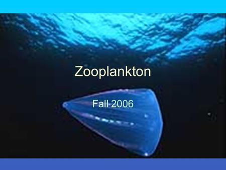 Zooplankton Fall 2006. Plankton Holoplankton Meroplankton Plankton Classification.