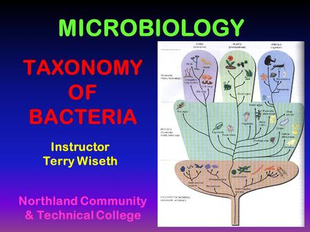 TAXONOMY OF BACTERIA Instructor Terry Wiseth MICROBIOLOGY Northland Community & Technical College.