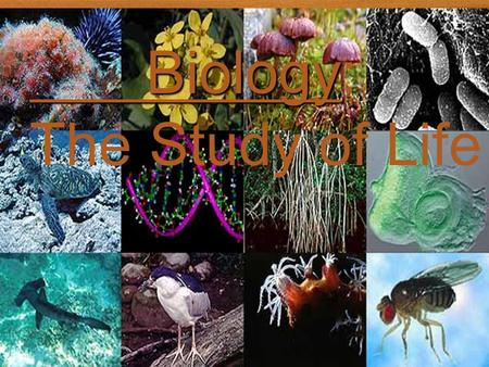 Biology The Study of Life Biology Biology: The Study of Life.