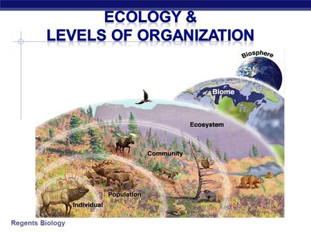 Regents Biology Ecology & Levels of Organization.
